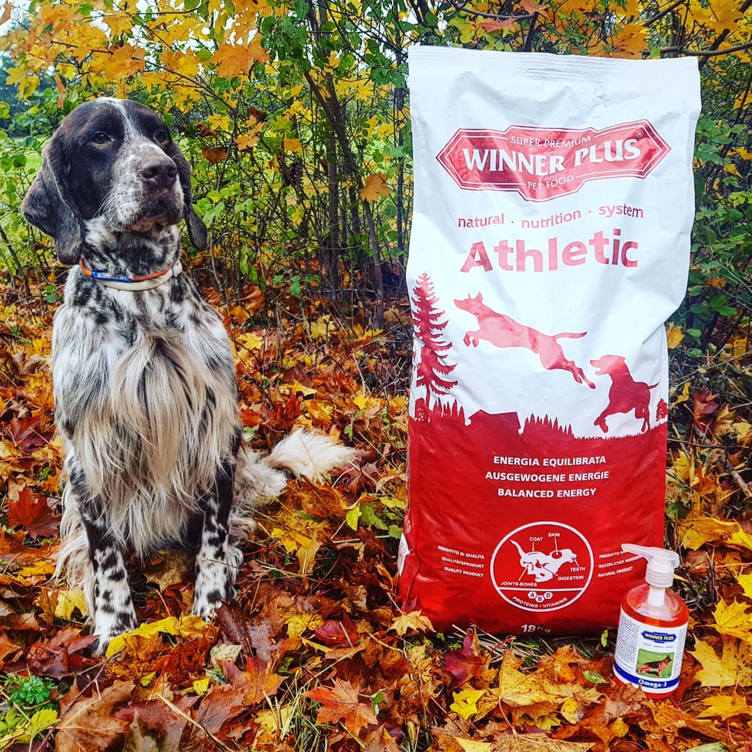 cibo per cani da caccia WINNER PLUS Athletic